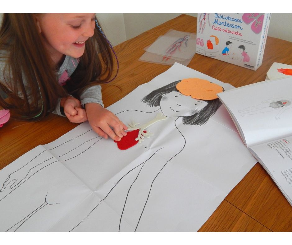 """Dziecko uczy się dzięki własnej aktywności, czerpiąc z kultury swojego własnego otoczenia Maria Montessori """"Biblioteczka Montessori. Ciało człowieka"""" możesznabyć z rabatem- TUTAJ"""