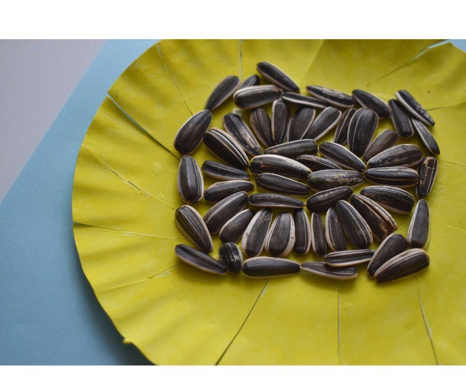 słoneczniki praca plastyczna
